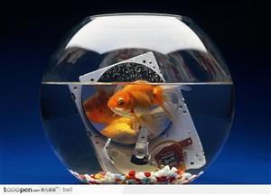 光盘 光驱 金鱼 鱼缸