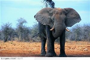 象之世界-吃东西的大象