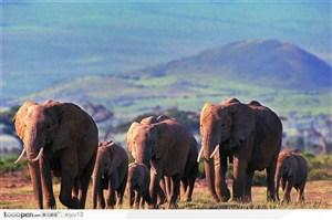 象之世界-草原上行走的大象