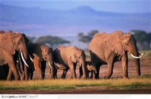 可爱的一群大象
