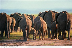 象之世界-一群大象背面