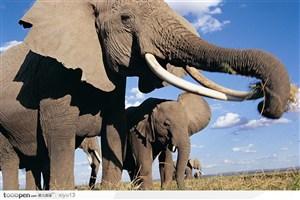 象之世界-蓝天下吃食的大象