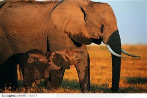 象之世界-大象妈妈和小象