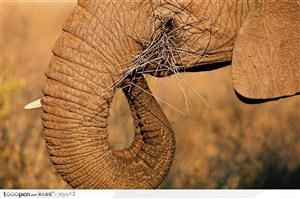 象之世界-大象鼻子特写
