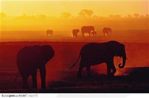 象之世界-夕阳下行走的大象
