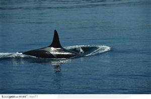 海中生物-浮出水面的鲸鱼