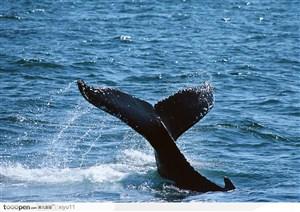 海中生物-溅起水花的鲸鱼尾巴