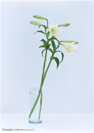 花卉物语-花瓶中的两只百合花