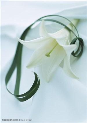 花卉物语-丝带旁的百合花