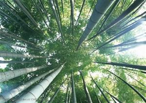竹林风景- 站在竹林里仰视天空