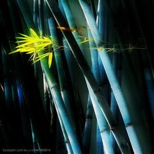 竹林风景- 幽暗的竹林里被阳光照射着的竹叶特写