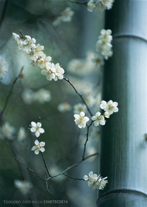 竹林风景- 竹竿边是的一只梨花特写