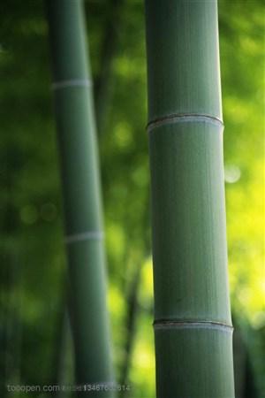 竹林风景- 竹林里的两根竹竿特写