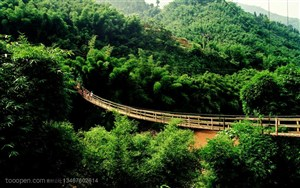 竹林风景- 竹林自然风景
