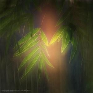 竹林风景- 竹林中的虚幻光影竹叶特写