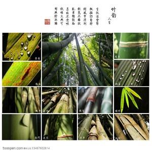 竹林风景- 竹林中的局部特写